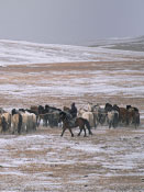 Oyuna, cashmere from Mongolia with home, accessories, womenwear, menwear and travel collections: Mongolia Landscape