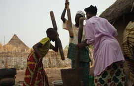 Malian women crushing shea nuts