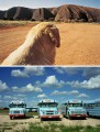 PHOTO 1: Dog on the Road to Ayers Rock, #2, Uluru, 1977, ® Wim Wenders Courtesy Blain Southern PHOTO 2: Joshua and John (behind), Odessa, Texas, 1983, ® Wim Wenders Courtesy Blain Southern